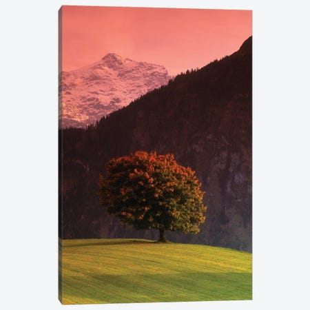 Lone Mountainside Tree, Swiss Alps, Switzerland Canvas Print #PIM601} by Panoramic Images Canvas Wall Art