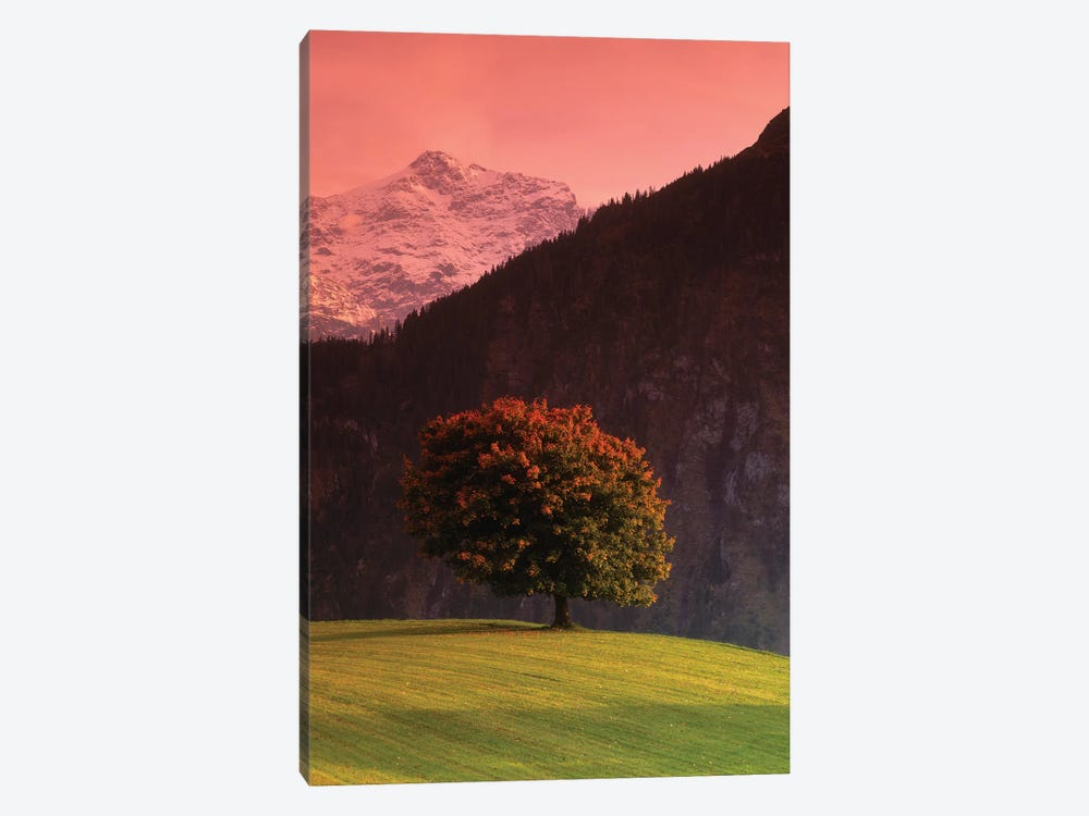 Lone Mountainside Tree, Swiss Alps, Switzerland by Panoramic Images 1-piece Canvas Print