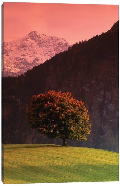 Lone Mountainside Tree, Swiss Alps, Switzerland Canvas Art Print