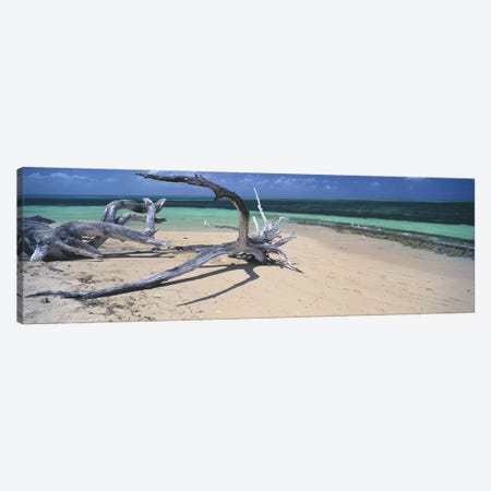 Driftwood on the beach, Green Island, Great Barrier Reef, Queensland, Australia Canvas Print #PIM6041} by Panoramic Images Canvas Wall Art
