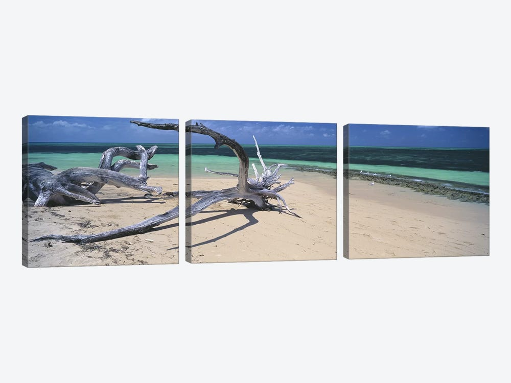 Driftwood on the beach, Green Island, Great Barrier Reef, Queensland, Australia by Panoramic Images 3-piece Art Print