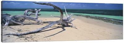 Driftwood on the beach, Green Island, Great Barrier Reef, Queensland, Australia Canvas Art Print