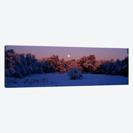 Snow covered forest at dawn, Denver, Colorado, USA Canvas Print #PIM604} by Panoramic Images Canvas Art Print