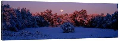 Snow covered forest at dawn, Denver, Colorado, USA Canvas Print #PIM604