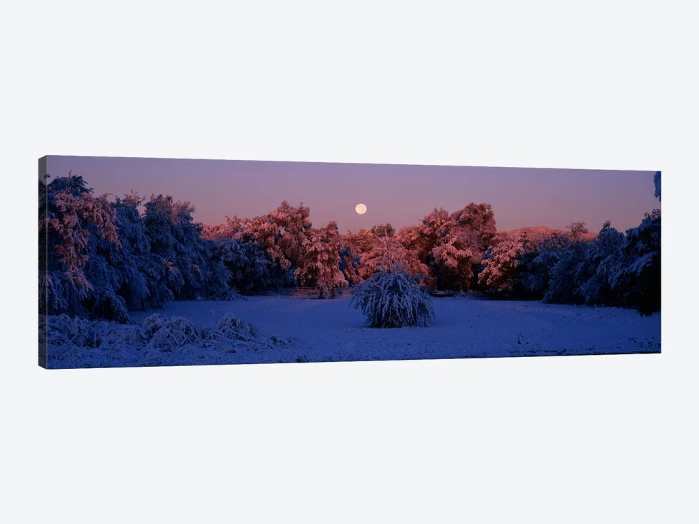 Snow covered forest at dawn, Denver, Colorado, USA by Panoramic Images 1-piece Canvas Wall Art