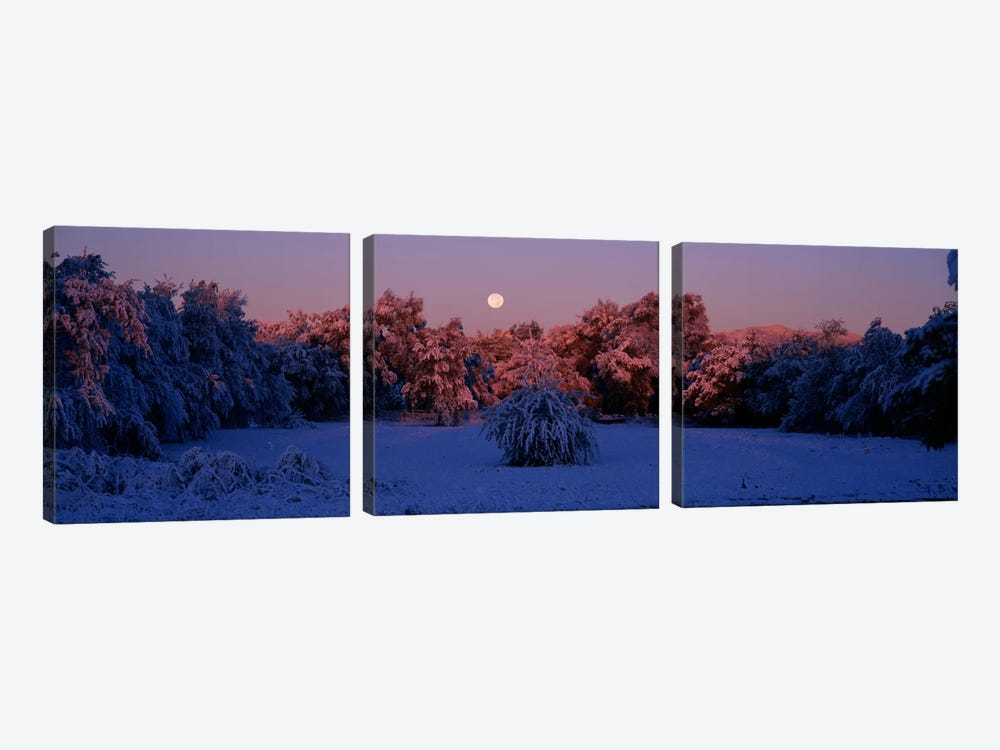 Snow covered forest at dawn, Denver, Colorado, USA by Panoramic Images 3-piece Canvas Art