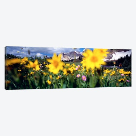 Cloudy Mountain Landscape Seen Through A Wildflower Field, Wyoming, USA Canvas Print #PIM606} by Panoramic Images Canvas Art Print