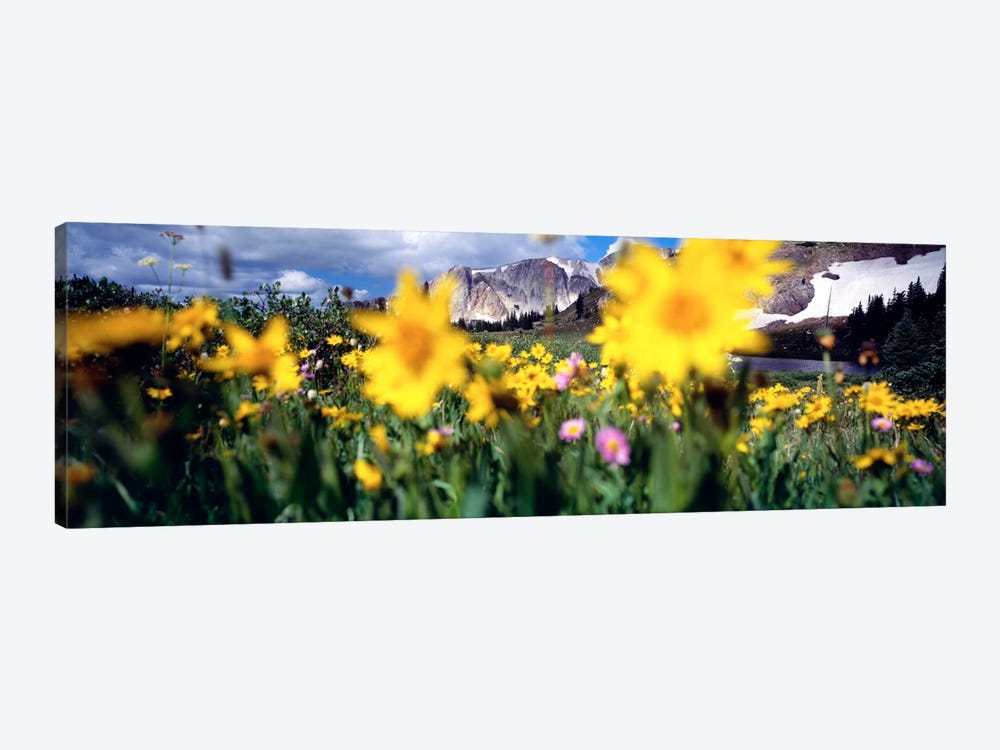 Cloudy Mountain Landscape Seen Through A Wildflower Field, Wyoming, USA by Panoramic Images 1-piece Canvas Artwork
