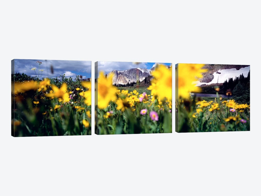 Cloudy Mountain Landscape Seen Through A Wildflower Field, Wyoming, USA by Panoramic Images 3-piece Canvas Wall Art