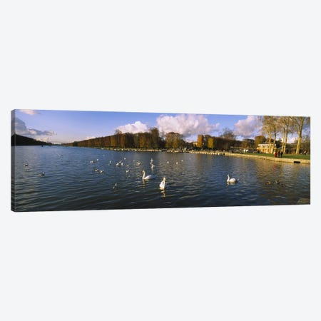 Flock of swans swimming in a lake, Chateau de Versailles, Versailles, Yvelines, France Canvas Print #PIM6187} by Panoramic Images Canvas Art