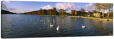 Flock of swans swimming in a lake, Chateau de Versailles, Versailles, Yvelines, France Canvas Art Print