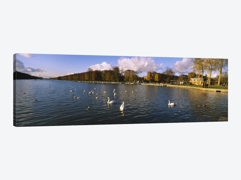 Flock of swans swimming in a lake, Chateau de Versailles, Versailles, Yvelines, France by Panoramic Images 1-piece Canvas Art