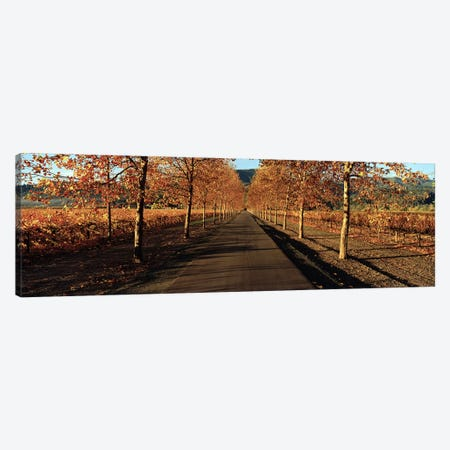 Autumn Vineyard Landscape, Beaulieu Vineyard, Rutherford AVA, Napa Valley, California Canvas Print #PIM6220} by Panoramic Images Canvas Wall Art