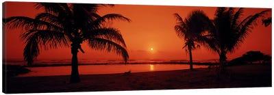 Silhouette of palm trees on the beach at duskLydgate Park, Kauai, Hawaii, USA Canvas Print #PIM6238