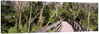 Boardwalk passing through a forestLettuce Lake Park, Tampa, Hillsborough County, Florida, USA Canvas Art Print