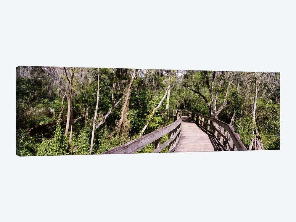 Boardwalk passing through a forestLettuce Lake Park, Tampa, Hillsborough County, Florida, USA by Panoramic Images 1-piece Canvas Wall Art