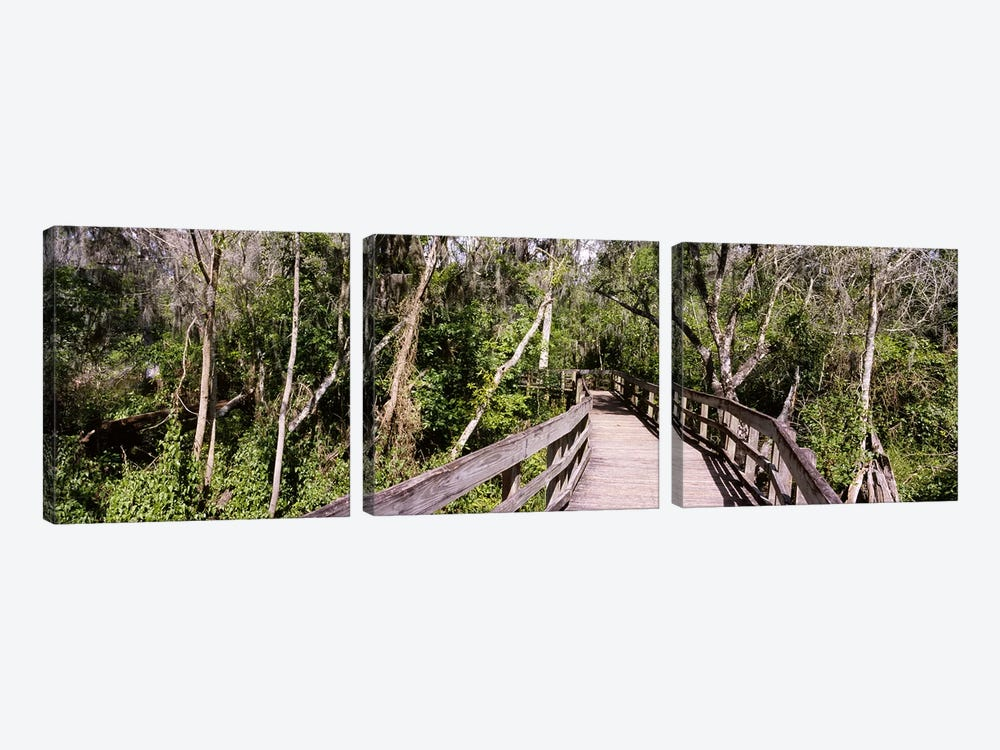 Boardwalk passing through a forestLettuce Lake Park, Tampa, Hillsborough County, Florida, USA by Panoramic Images 3-piece Canvas Art