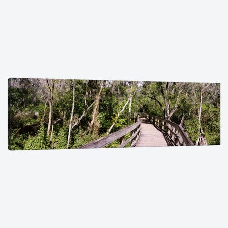 Boardwalk passing through a forestLettuce Lake Park, Tampa, Hillsborough County, Florida, USA Canvas Print #PIM6249} by Panoramic Images Canvas Wall Art
