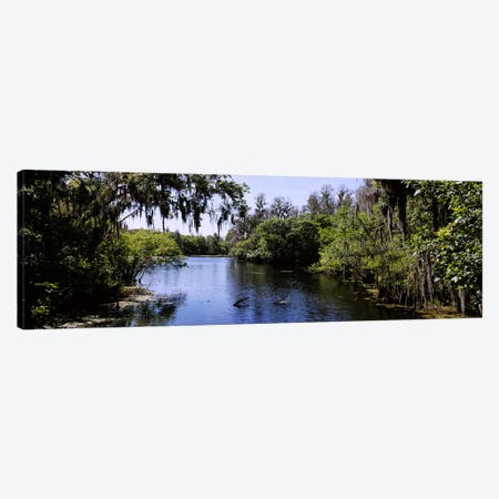 River passing through a forestHillsborough River, Lettuce Lake Park, Tampa, Hillsborough County, Florida, USA Canvas Print #PIM6250} by Panoramic Images Art Print