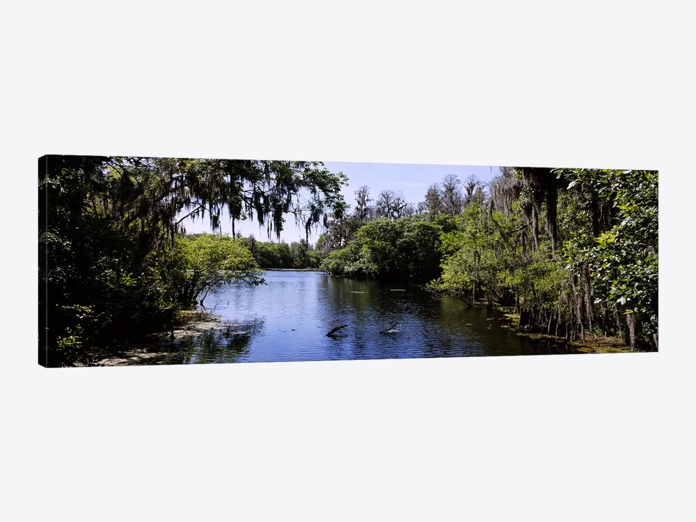 River passing through a forestHillsborough River, Lettuce Lake Park, Tampa, Hillsborough County, Florida, USA by Panoramic Images 1-piece Canvas Wall Art