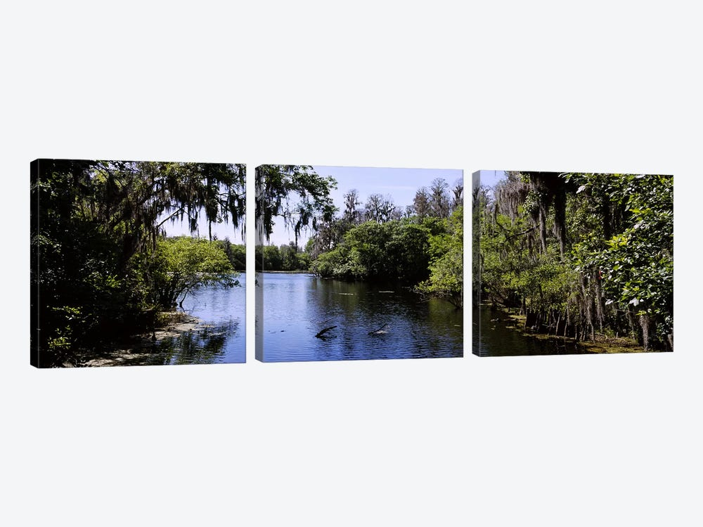 River passing through a forestHillsborough River, Lettuce Lake Park, Tampa, Hillsborough County, Florida, USA by Panoramic Images 3-piece Canvas Artwork
