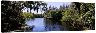 River passing through a forestHillsborough River, Lettuce Lake Park, Tampa, Hillsborough County, Florida, USA Canvas Art Print