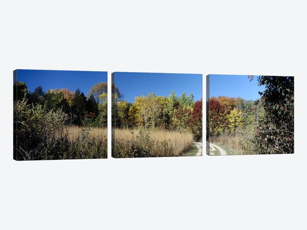 Dirt road passing through a forest, University of Wisconsin Arboretum, Madison, Dane County, Wisconsin, USA by Panoramic Images 3-piece Canvas Artwork
