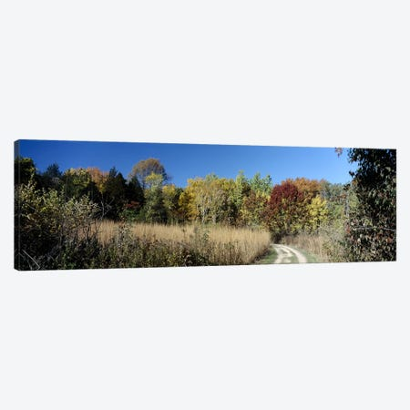 Dirt road passing through a forest, University of Wisconsin Arboretum, Madison, Dane County, Wisconsin, USA Canvas Print #PIM6298} by Panoramic Images Canvas Print