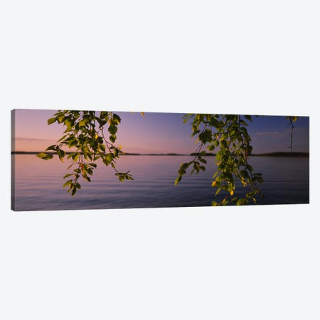 Close-Up Of Leaves On A Lakeside Birch, South Karelia, Finland Canvas Print #PIM6314} by Panoramic Images Canvas Art Print