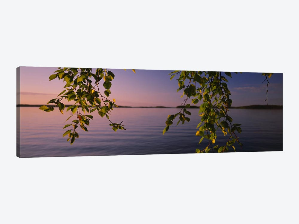 Close-Up Of Leaves On A Lakeside Birch, South Karelia, Finland by Panoramic Images 1-piece Canvas Print