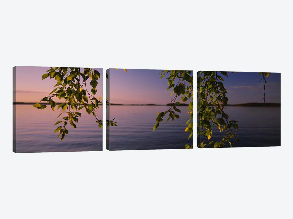 Close-Up Of Leaves On A Lakeside Birch, South Karelia, Finland by Panoramic Images 3-piece Art Print