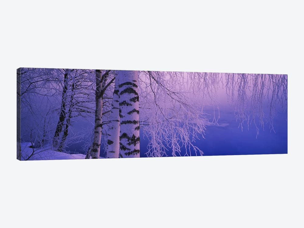 Birch tree at a riverside, Vuoksi River, Imatra, Finland by Panoramic Images 1-piece Canvas Print