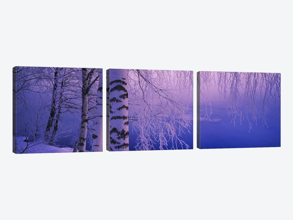 Birch tree at a riverside, Vuoksi River, Imatra, Finland by Panoramic Images 3-piece Art Print