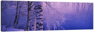 Birch tree at a riverside, Vuoksi River, Imatra, Finland Canvas Art Print