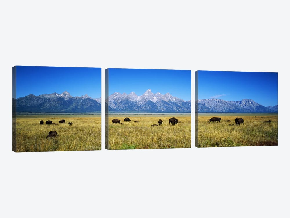 Field of Bison with mountains in backgroundGrand Teton National Park, Wyoming, USA by Panoramic Images 3-piece Canvas Artwork