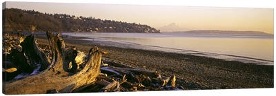 Driftwood on the beach, Discovery Park, Mt Rainier, Seattle, King County, Washington State, USA Canvas Art Print