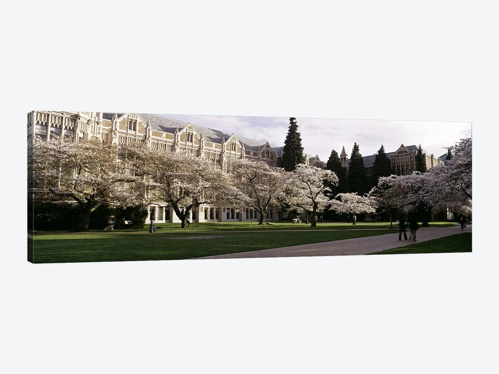Cherry trees in the quad of a university, University of Washington, Seattle, King County, Washington State, USA by Panoramic Images 1-piece Canvas Art Print