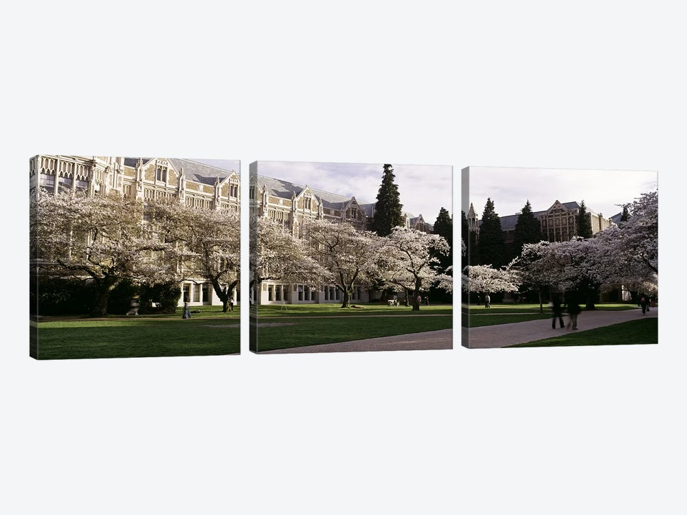 Cherry trees in the quad of a university, University of Washington, Seattle, King County, Washington State, USA by Panoramic Images 3-piece Art Print