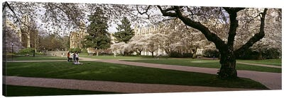 Cherry trees in the quad of a university, University of Washington, Seattle, King County, Washington State, USA #2 Canvas Art Print