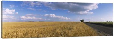 Clouds Over A Field Of Wheat, North Dakota, USA Canvas Art Print