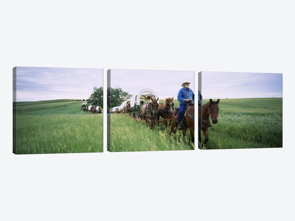Historical reenactment of covered wagons in a field, North Dakota, USA by Panoramic Images 3-piece Canvas Print