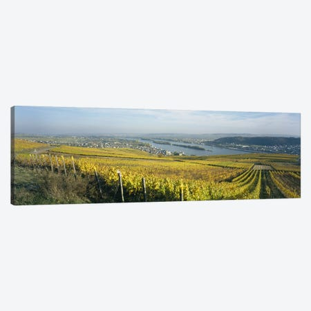Vineyard And Town Buildings, Rudesheim, Upper Midle Rhine Valley, Hesse, Germany Canvas Print #PIM6392} by Panoramic Images Canvas Artwork