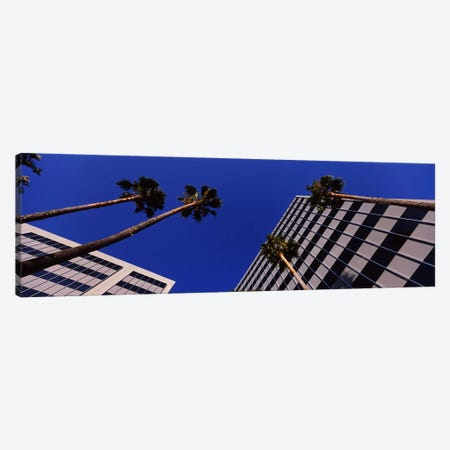 Low-Angle View Of Palm Trees & Office Buildings, San Jose, Santa Clara County, California, USA Canvas Print #PIM6412} by Panoramic Images Canvas Art Print
