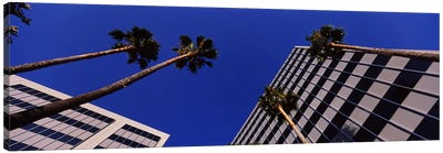 Low-Angle View Of Palm Trees & Office Buildings, San Jose, Santa Clara County, California, USA Canvas Art Print