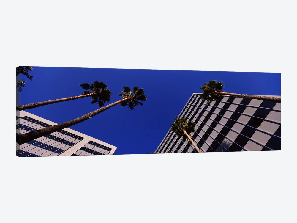 Low-Angle View Of Palm Trees & Office Buildings, San Jose, Santa Clara County, California, USA by Panoramic Images 1-piece Canvas Art