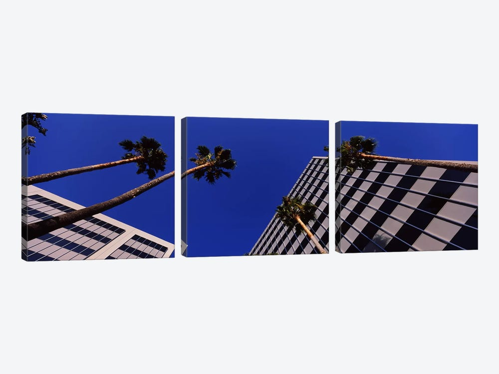 Low-Angle View Of Palm Trees & Office Buildings, San Jose, Santa Clara County, California, USA by Panoramic Images 3-piece Canvas Wall Art
