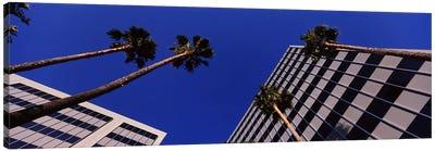 Low-Angle View Of Palm Trees & Office Buildings, San Jose, Santa Clara County, California, USA Canvas Art Print