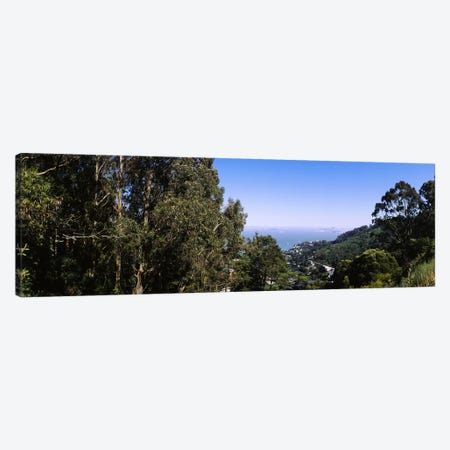 Trees on a hill, Sausalito, San Francisco Bay, Marin County, California, USA Canvas Print #PIM6470} by Panoramic Images Art Print