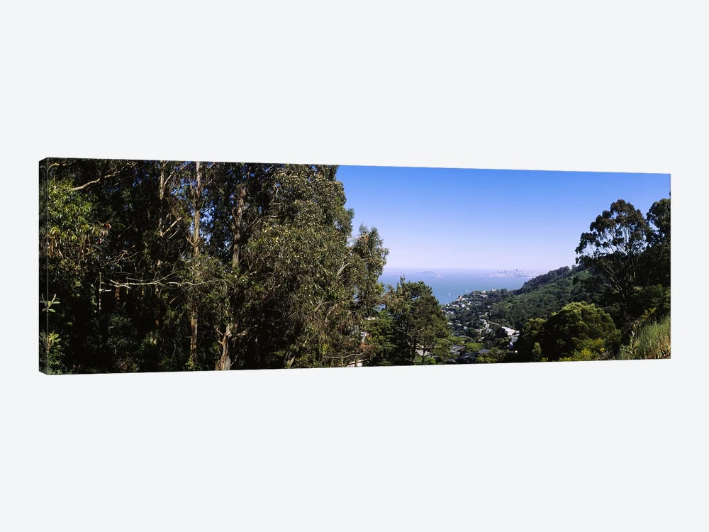 Trees on a hill, Sausalito, San Francisco Bay, Marin County, California, USA by Panoramic Images 1-piece Canvas Art