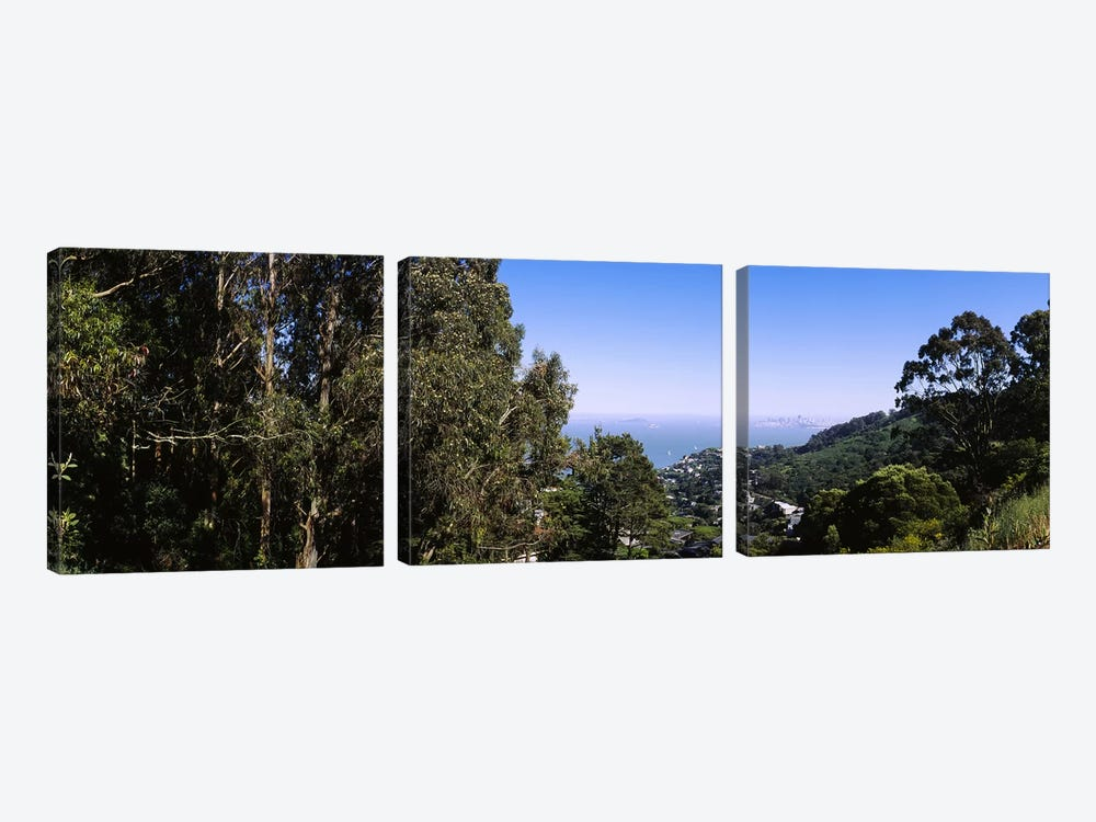 Trees on a hill, Sausalito, San Francisco Bay, Marin County, California, USA by Panoramic Images 3-piece Canvas Art